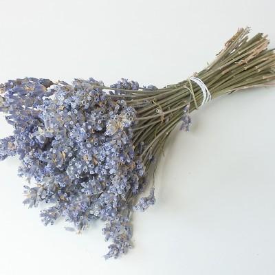 Lavender Scented Vacuum Cleaner