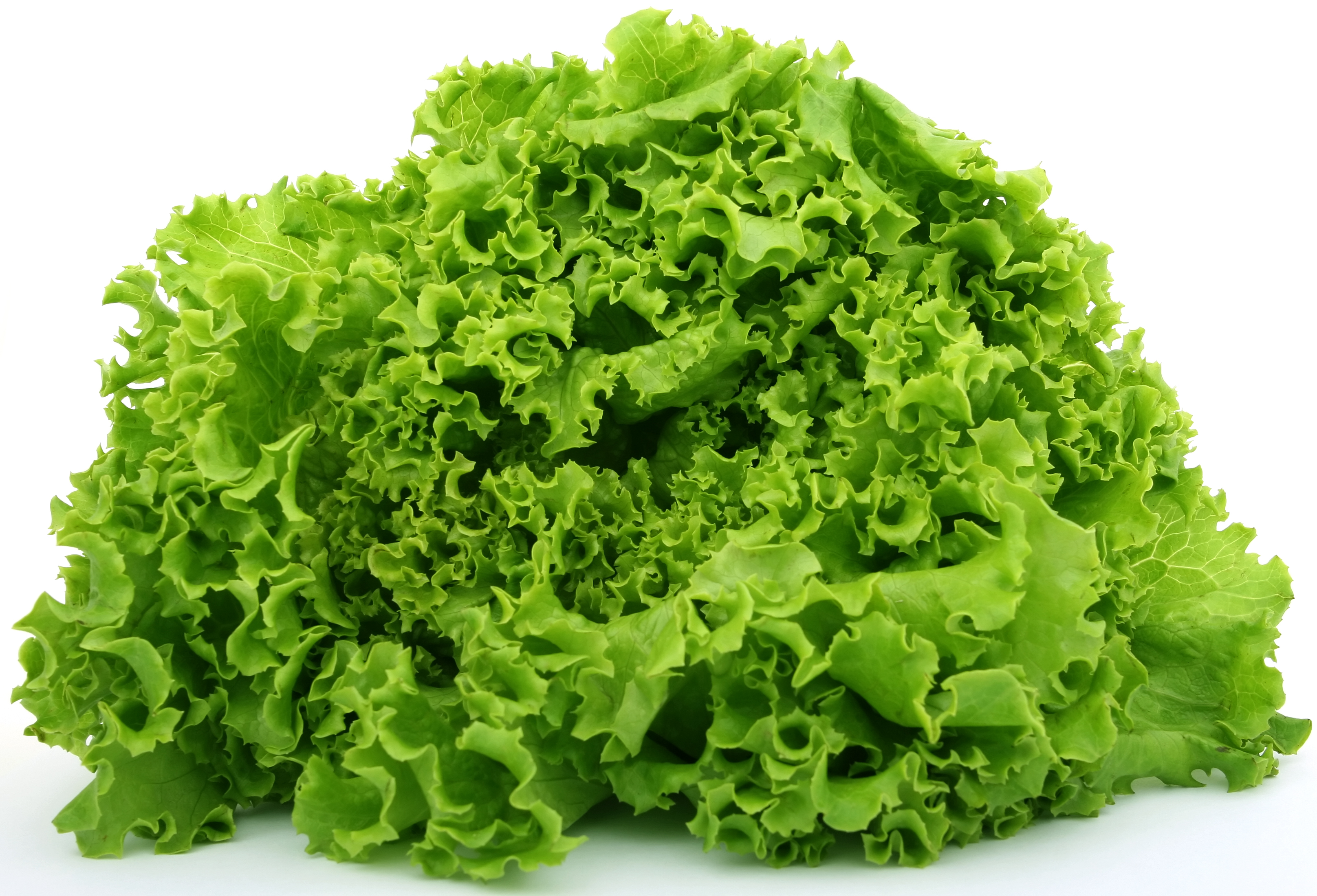 Green Leaf Lettuce Types