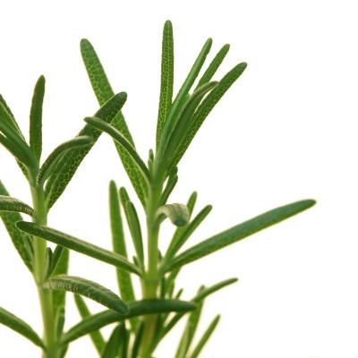 Rosemary Hair Remedy