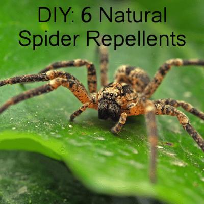 6 DIY Spider Repellent Sprays: Peppermint Oil & Vinegar Pepper Spray