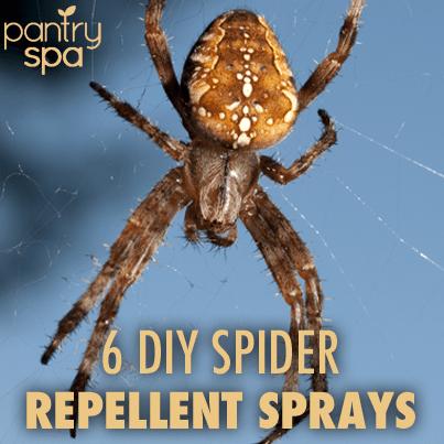6 Diy Spider Repellent Sprays Peppermint Oil Vinegar