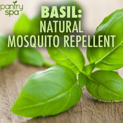 Basil Found to be Natural Mosquito Repellent & Scotch Tape Stops Itch