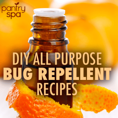 DIY Spider Repellent Recipes