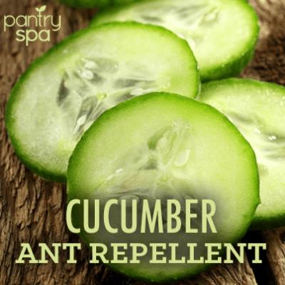 DIY Ant Repellent & Homemade Ant Bait