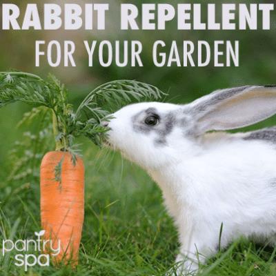Deer & Rabbit Repellent Spray: DIY Natural Garden Remedies for Furry Pests